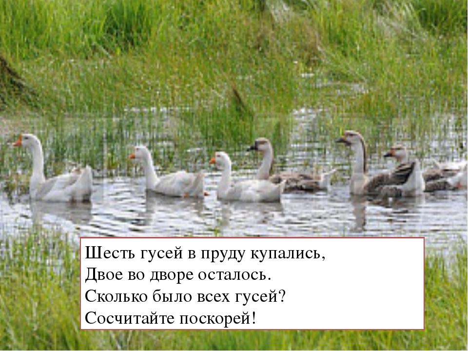 Шесть гусей в пруду купались, Двое во дворе осталось. Сколько было всех гусей...