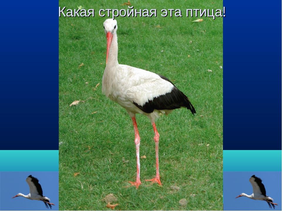 Какая стройная эта птица!