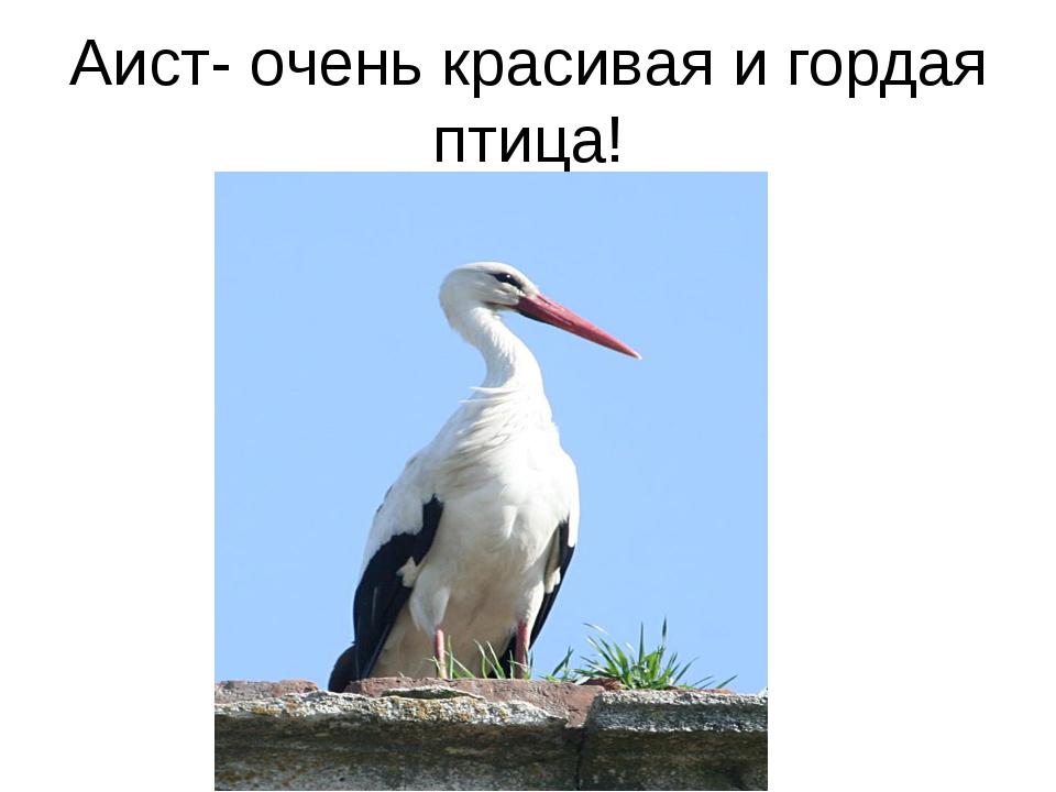 Аист- очень красивая и гордая птица!