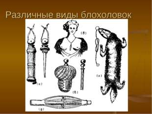 Различные виды блохоловок