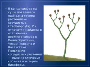 В конце силура на суше появляется ещё одна группа растений — сосудистые (Trac