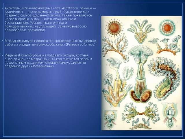 Акантоды, или колючкозу́бые (лат. Acanthodii, раньше — Acanthodei) — класс вы...