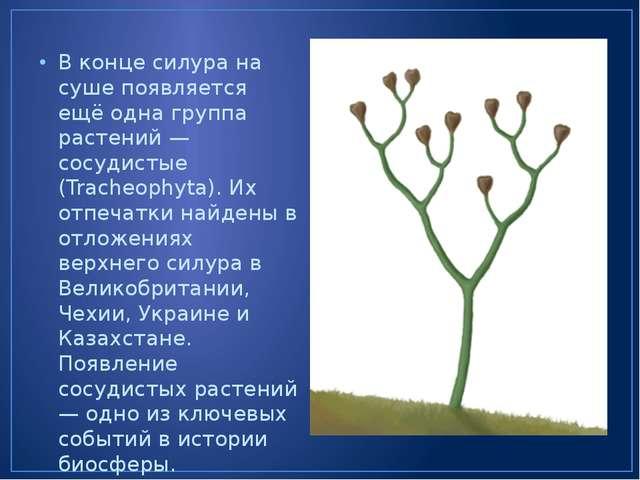 В конце силура на суше появляется ещё одна группа растений — сосудистые (Trac...