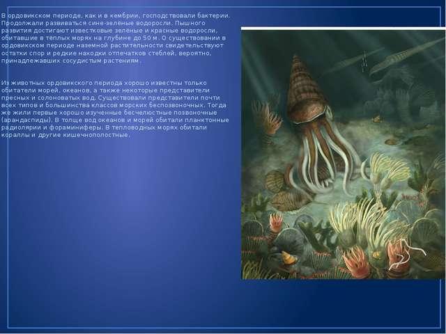 В ордовикском периоде, как и в кембрии, господствовали бактерии. Продолжали р...