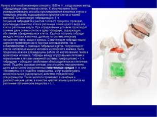 Начало клеточной инженерии относят к 1960-м гг., когда возник метод гибридиз