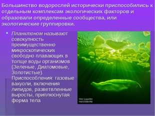 Большинство водорослей исторически приспособились к отдельным комплексам экол