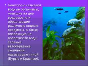 Бентосом называют водные организмы, живущие на дне водоемов или обрастающие р