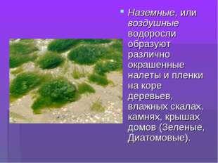 Наземные, или воздушные водоросли образуют различно окрашенные налеты и пленк