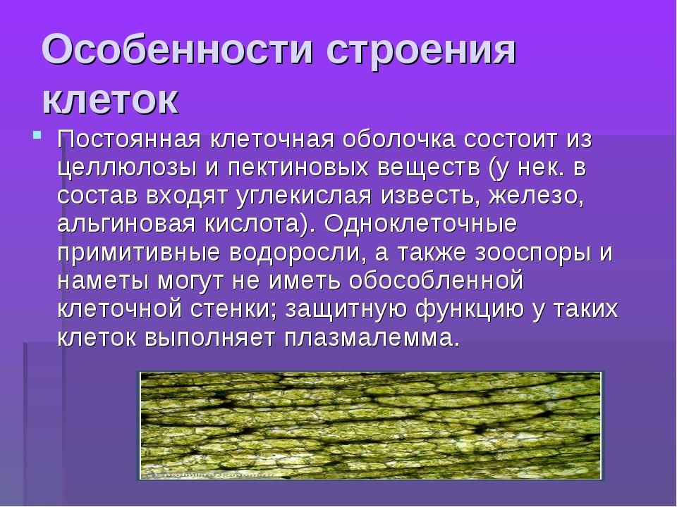 Особенности строения клеток Постоянная клеточная оболочка состоит из целлюлоз...