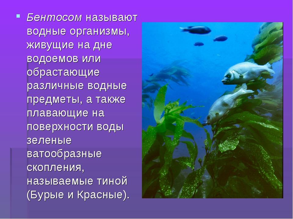 Бентосом называют водные организмы, живущие на дне водоемов или обрастающие р...