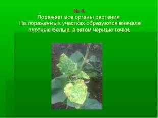 № 4. Поражает все органы растения. На пораженных участках образуются вначале
