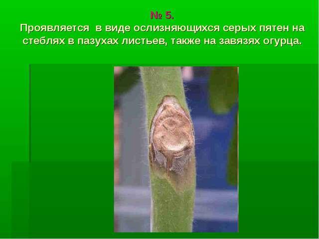 № 5. Проявляется в виде ослизняющихся серых пятен на стеблях в пазухах листье...