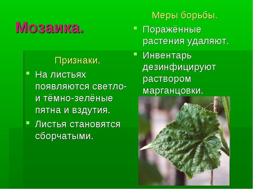 Мозаика. Признаки. На листьях появляются светло- и тёмно-зелёные пятна и взду...