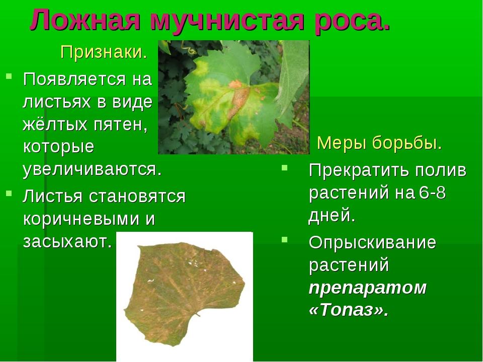 Ложная мучнистая роса. Признаки. Появляется на листьях в виде жёлтых пятен, к...