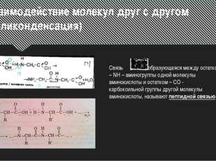 Вывод: Аминокислоты – это амфотерные органические соединения, так как их хими