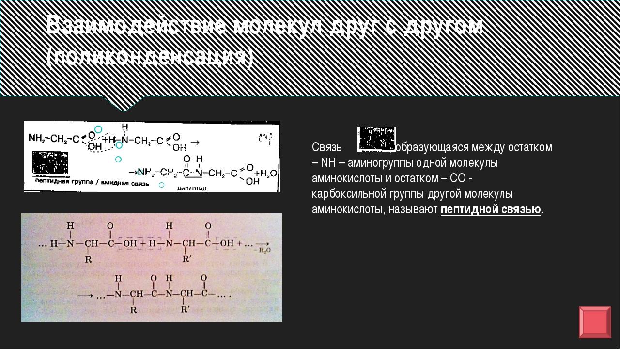 Вывод: Аминокислоты – это амфотерные органические соединения, так как их хими...