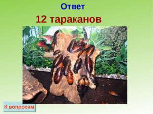 Ответ К вопросам 12 тараканов