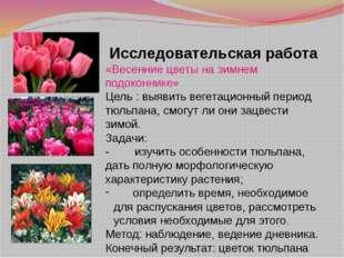 Исследовательская работа «Весенние цветы на зимнем подоконнике» Цель : выявит
