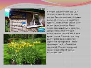 Сегодня Ботанический сад СГУ обладает самой богатой на юго-востоке России ко