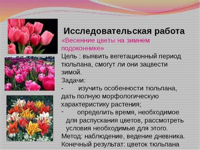 Исследовательская работа «Весенние цветы на зимнем подоконнике» Цель : выявит...