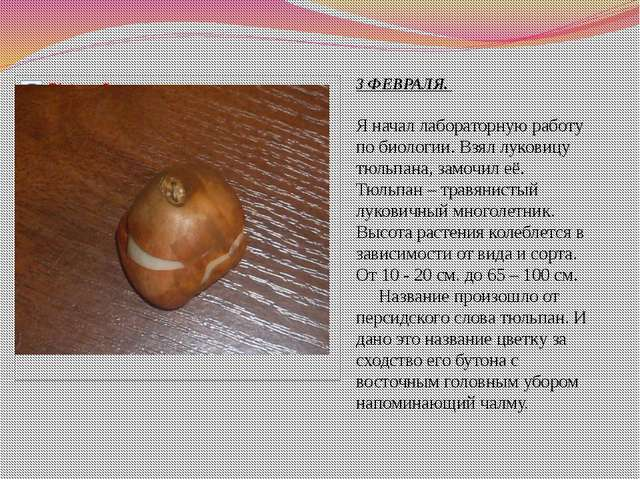 3 ФЕВРАЛЯ. Я начал лабораторную работу по биологии. Взял луковицу тюльпана, з...