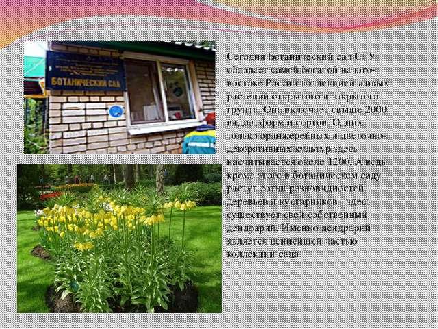 Сегодня Ботанический сад СГУ обладает самой богатой на юго-востоке России ко...