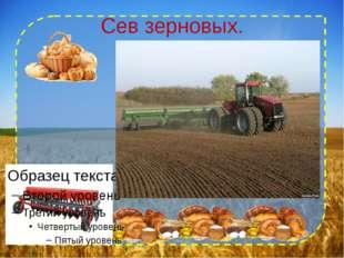 Сев зерновых.
