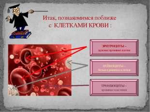 Итак, познакомимся поближе с КЛЕТКАМИ КРОВИ : ЭРИТРОЦИТЫ – красные кровяные