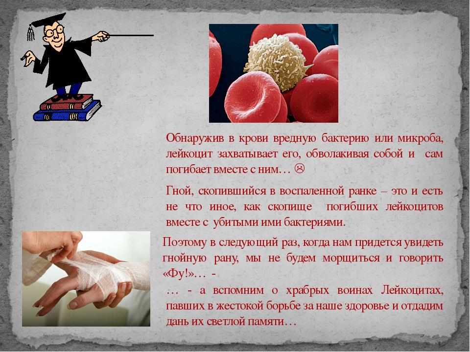 Обнаружив в крови вредную бактерию или микроба, лейкоцит захватывает его, обв...