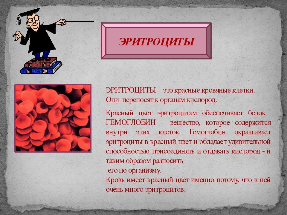 ЭРИТРОЦИТЫ ЭРИТРОЦИТЫ – это красные кровяные клетки. Они переносят к органам...