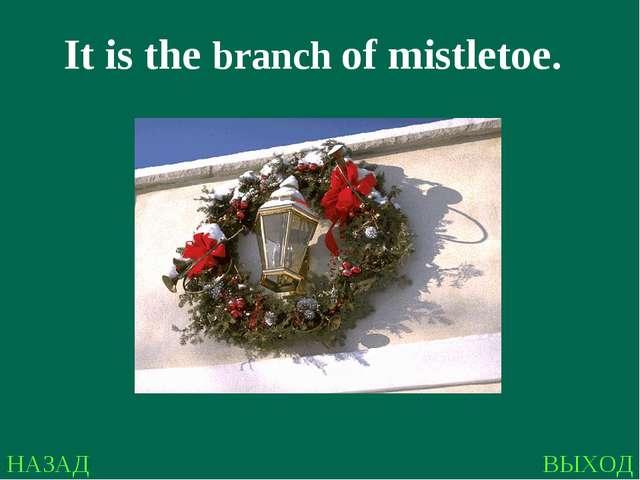 НАЗАД ВЫХОД It is the branch of mistletoe.