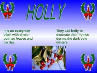 They use holly to decorate their homes during the dark cold winters. It is an