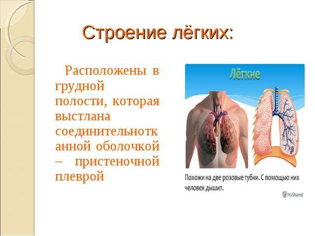 Строение лёгких: Расположены в грудной полости, которая выстлана соединительн...