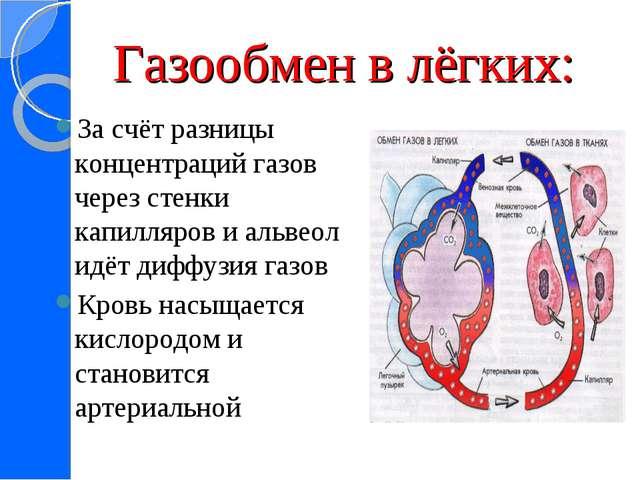 Газообмен в лёгких: За счёт разницы концентраций газов через стенки капилляро...