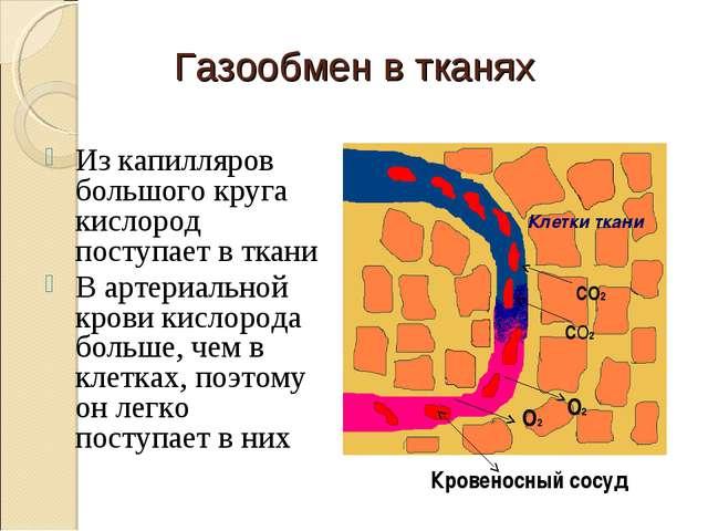 Газообмен в тканях Из капилляров большого круга кислород поступает в ткани В...
