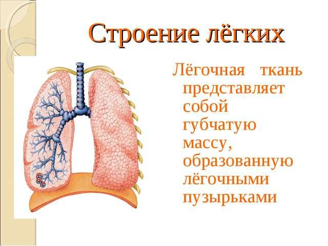 Строение лёгких Лёгочная ткань представляет собой губчатую массу, образованну...