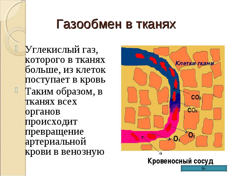 Газообмен в тканях Углекислый газ, которого в тканях больше, из клеток поступ...