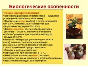 Биологические особенности Плоды картофеля ядовиты! Картофель размножают вегет