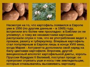 Несмотря на то, что картофель появился в Европе уже в 1550 (по другим данным
