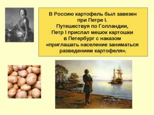В Россию картофель был завезен при Петре I. Путешествуя по Голландии, Петр I