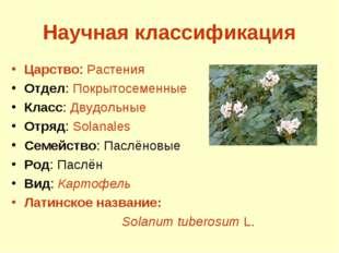 Научная классификация Царство: Растения Отдел: Покрытосеменные Класс: Двудоль
