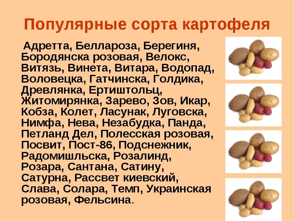 Популярные сорта картофеля Адретта, Беллароза, Берегиня, Бородянска розовая,...