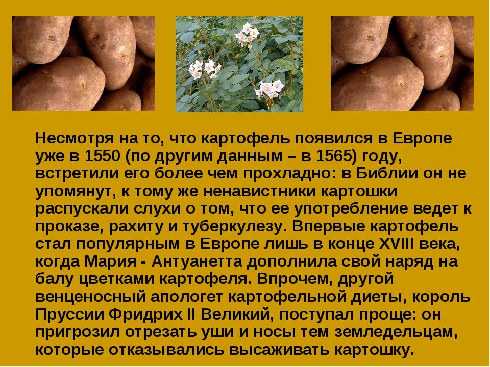 Несмотря на то, что картофель появился в Европе уже в 1550 (по другим данным...