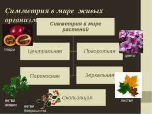 Симметрия в мире живых организмов Скользящая цветы листья плоды ветви акации