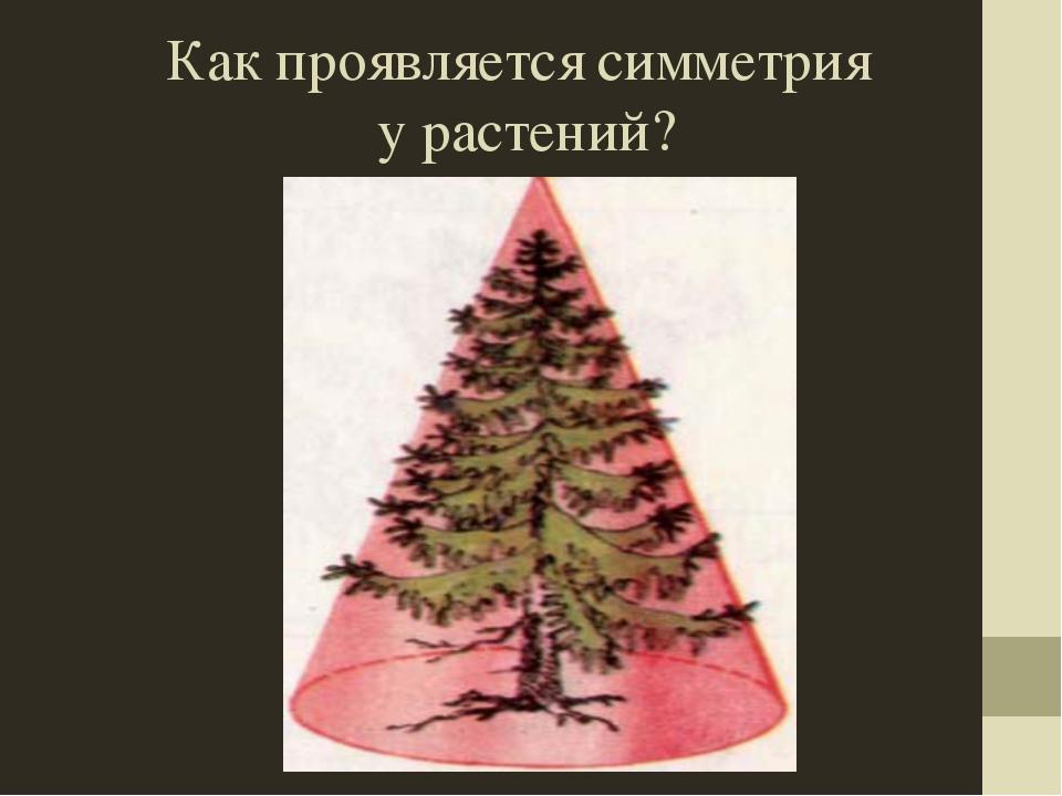Как проявляется симметрия у растений?