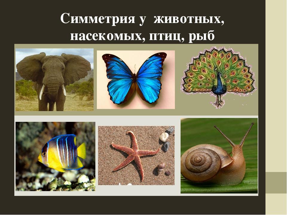 Симметрия у животных, насекомых, птиц, рыб