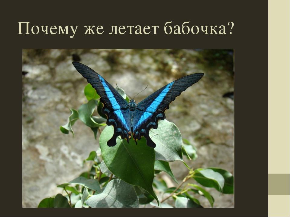 Почему же летает бабочка?