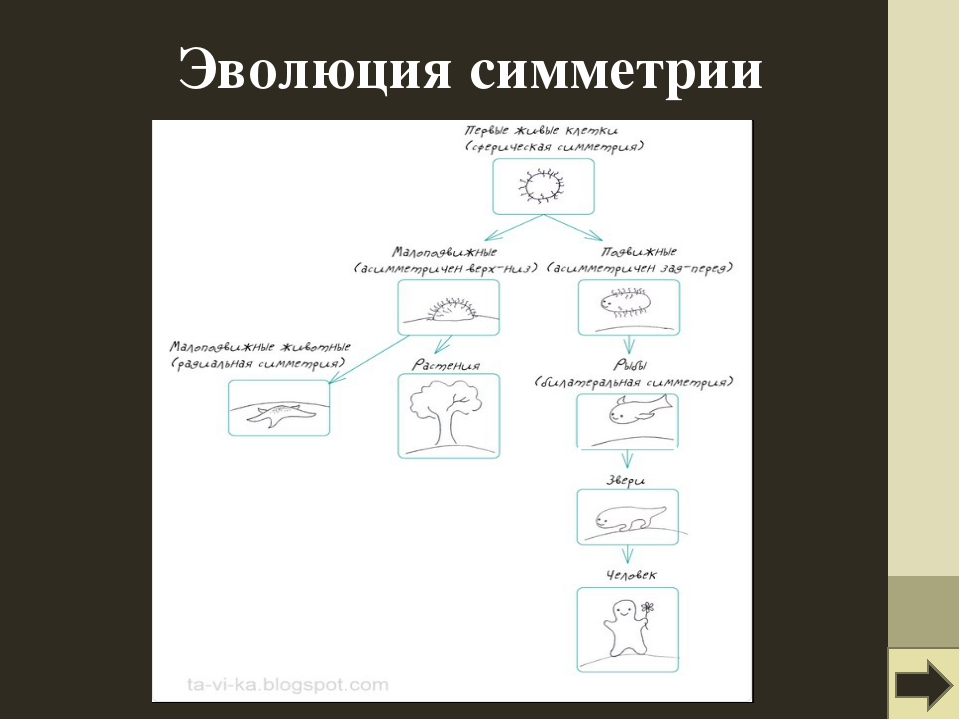 Эволюция симметрии