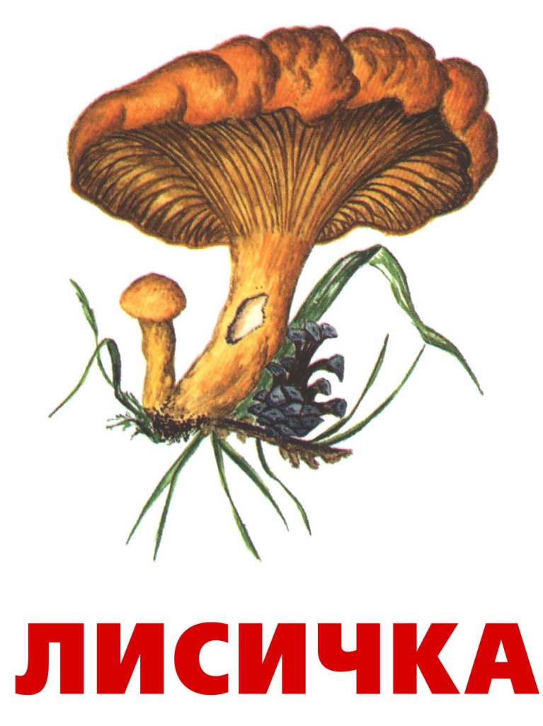 http://900igr.net/datai/rastenija-i-griby/Griby-4.files/0009-007-Lisichka.jpg
