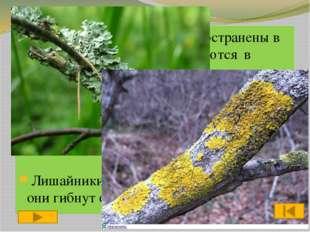 2 этап «Эрудиты» Рассказать об одном из растений,грибов,бактерий-9б. Время-1мин